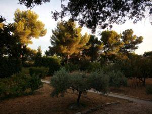 Lumière d'été en Provence